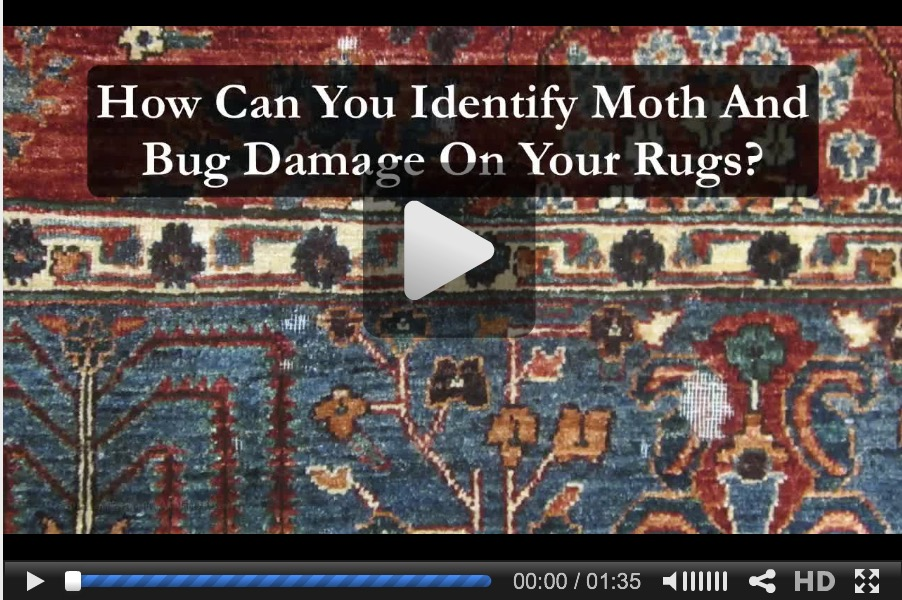 Identify Moth Damage video