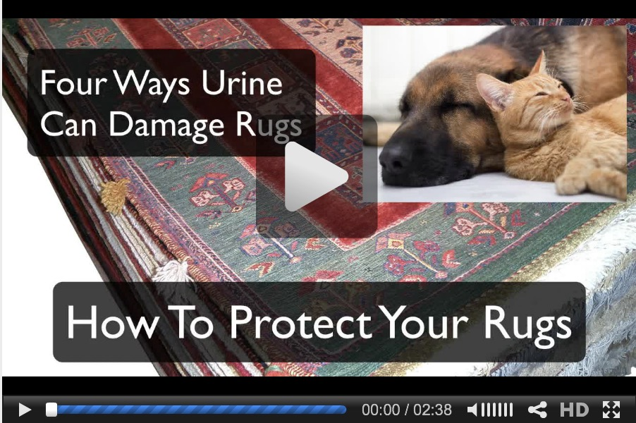 Protecting Rugs From Pet Urine video