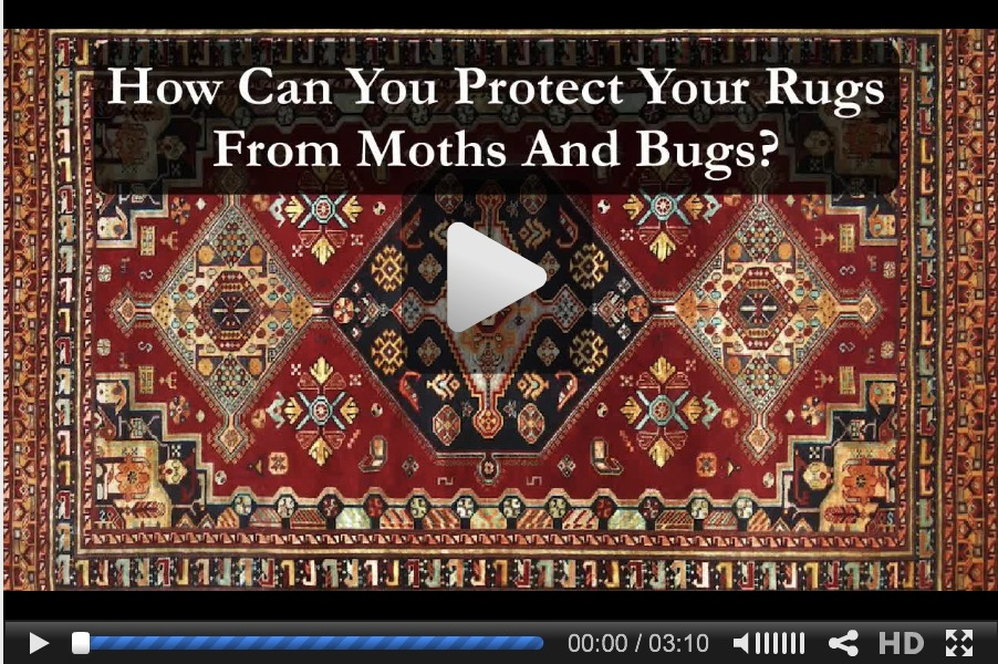Protect Your Rugs From Moths and Bugs video